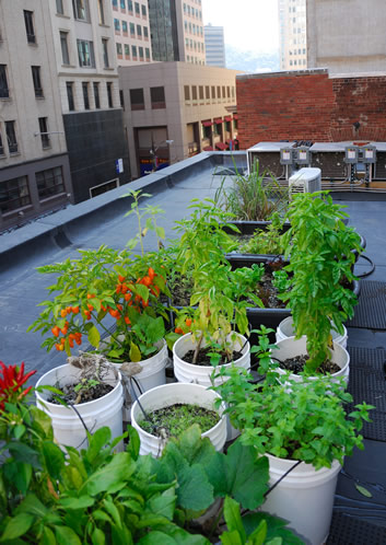 A. The Benefits of a Kitchen Garden   Great Allegheny Passage